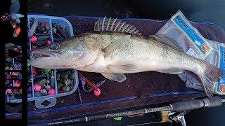 Зашкварная Рыбалка по СУДАКУ!!!  НЕ мог НЕ выложить!!!