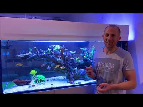 Die Frage Der Woche - Totgestein / Lebendgestein Im Meerwasseraquarium
