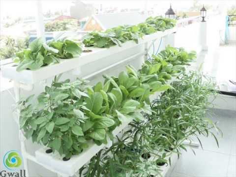 He thong thuy canh hoi luu GWALL (hydroponics in vietnam)