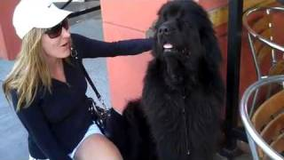 Crystal Cam Vlog#3:  Check Out This Cute & Huge Dog I Met Today On My Way To Get A New Phone.