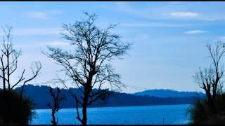 1 Hour - Relaxing Nature Sounds - Dawn Chorus Birdsong
