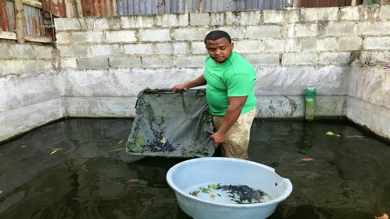 Los 7 estanque de peces betta plakat m s grande youtube for Criadero de peces goldfish