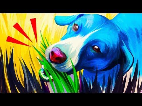 Почему собаки едят траву и еще 31 поразительный факт