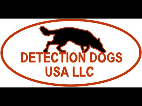 Detection Dogs USA LLC- Search and Rescue Wilderness night Search for Live Vicitim