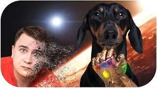 Dog spoil Avengers: Infinity War! Try not to laugh or grin!