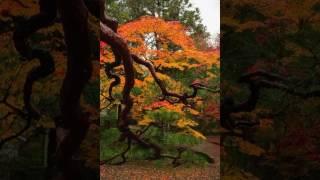Tōru Takemitsu [武満 徹]: In an autumn garden, for gagaku orchestra (Takemitsu, Tokyo Gakuso)