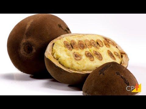 Clique e veja o vídeo Curso a Distância Produção de Cupuaçu