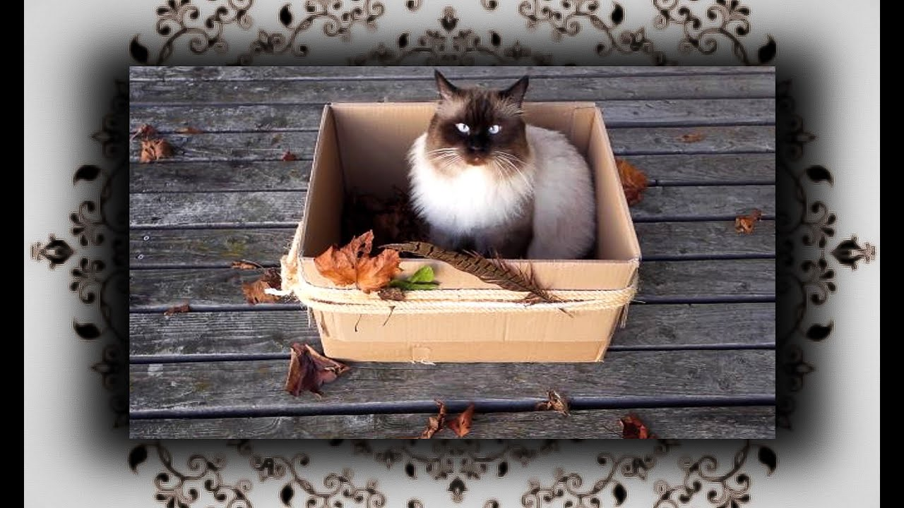 diy laub kiste f r katzen foliage leaves box for cats. Black Bedroom Furniture Sets. Home Design Ideas