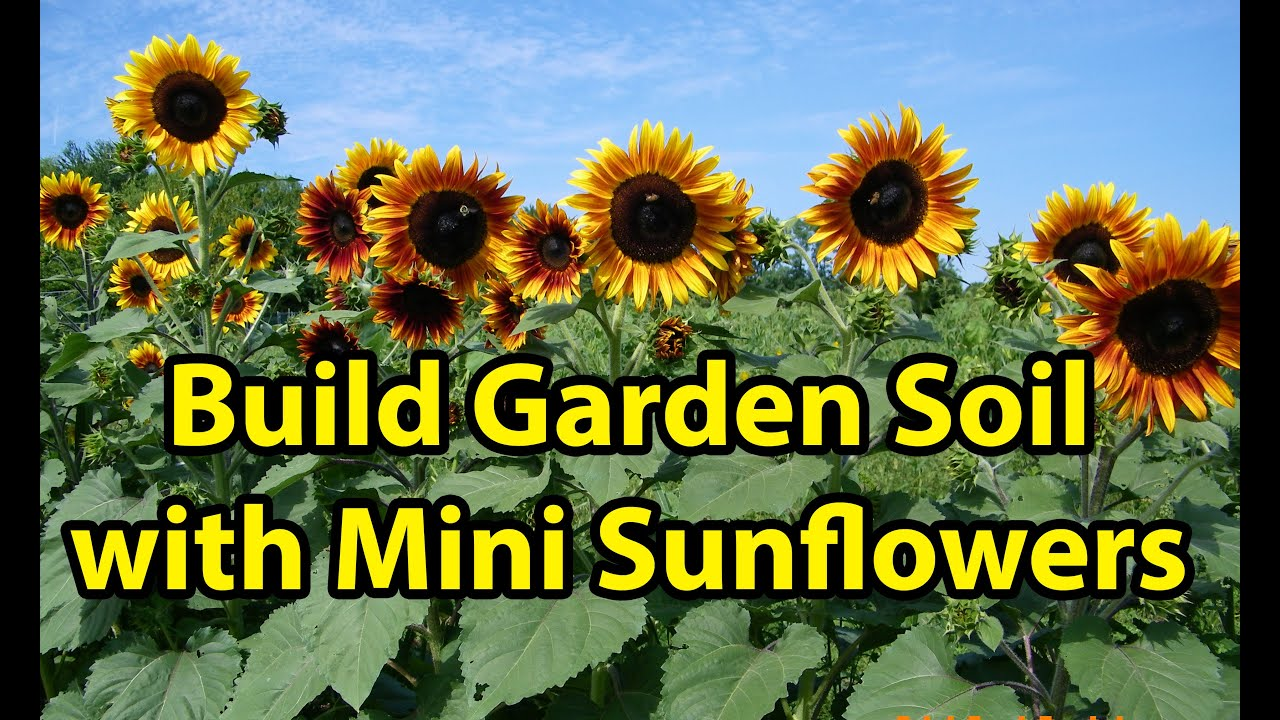 Building Healthy Garden Soil Improvement With Mini Blooming