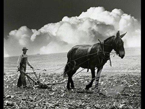 John Hammond - Get Behind The Mule