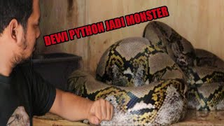 GAWAT DEWI PYTHON KOK JADI MONSTER SEKARANG !!