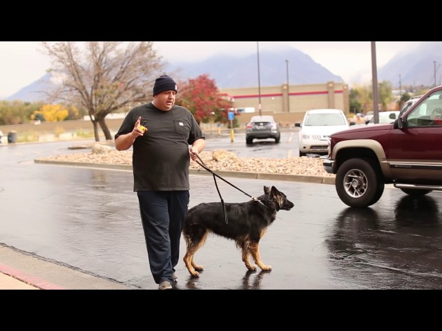 TYD60 Moment Step Back Recall- Fixing Dog Aggression