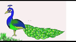 Easy Kids Drawing Lessons : How to Draw a Peacock