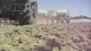 Seed Corn Farming