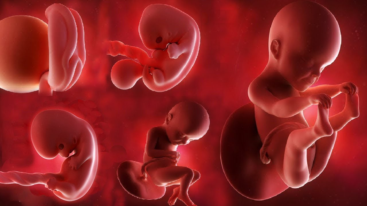Fetal development month by month: Stages of Baby Growth in the Womb #1