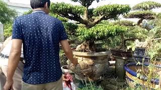 Vườn anh Thành Vàng Thành phố Nam Định