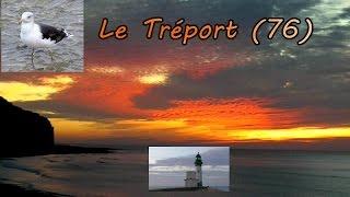 Le Tréport , ses goélands, son phare, son coucher de soleil