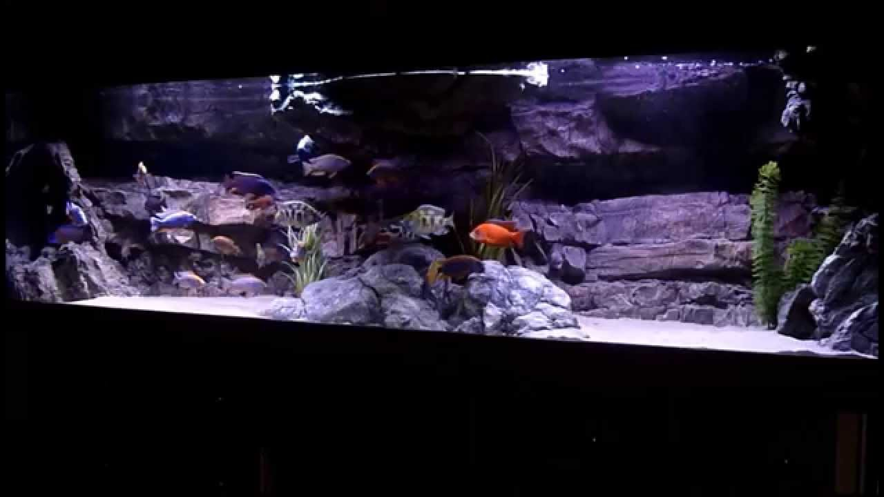 malawi cichliden aquarium 720l youtube. Black Bedroom Furniture Sets. Home Design Ideas