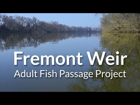 Fremont Weir Adult Fish Passage Project
