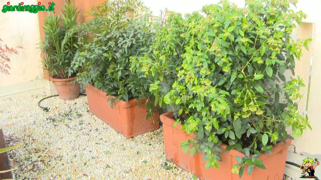 Giardino in terrazzo: piantumazione concimazione e irrigazione - YouTube