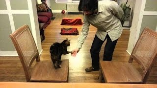 Teaching an old cat new dog tricks