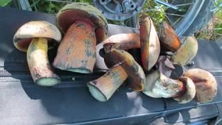 Заготовки на зиму Рецепт №1: Маринованные грибы на зиму