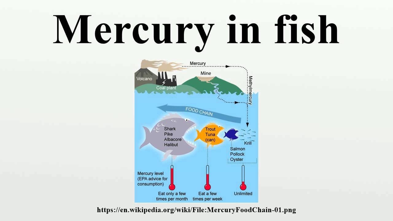 Mercury in fish youtube for Why do fish have mercury