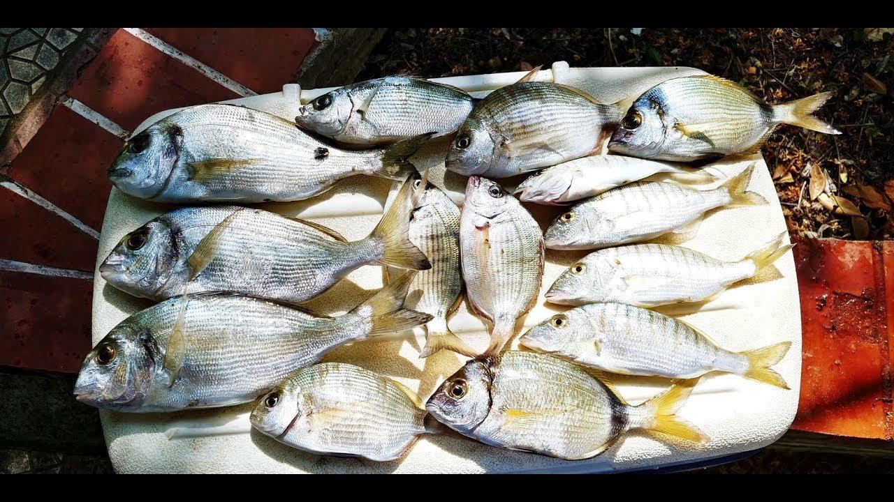 ψαρεμα στο πρωτο ποδι χαλκιδικης 9 6 2019 - YouTube