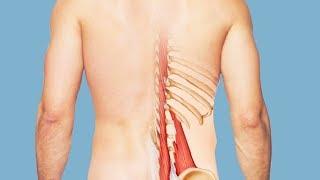 Квадратная мышца поясницы. Анатомия и триггерные точки квадратной мышцы поясницы