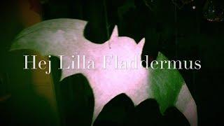 Olga & Edvin  - Hej Lilla Fladdermus