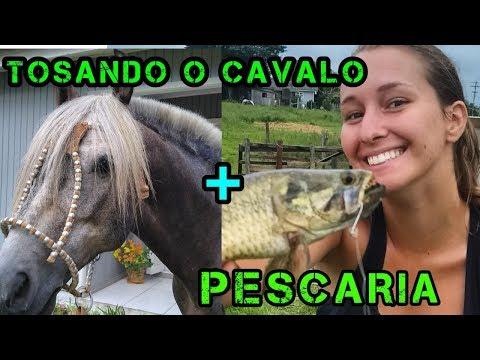 PEGUEI 5 PEIXES SEGUIDOS - Guria Do Sul