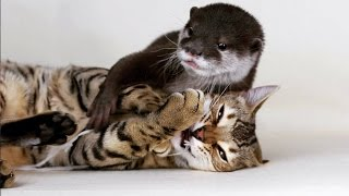Sam The Bengal Cat & Pip The Otter