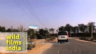 Driving into a stud farm at Kaderpur in Gurgaon