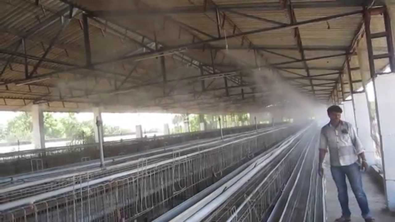Fogging System In Poultry Farm Youtube