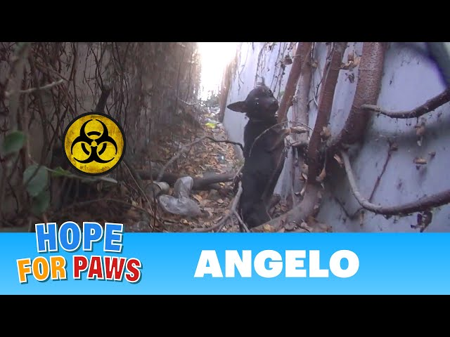 Hope For Paws: Angelo - a homeless dog living in a trench next to a biohazard disposal company.