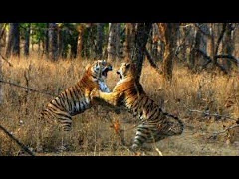 Documentary National Geographic - Wild Nature - Nat Geo Wild