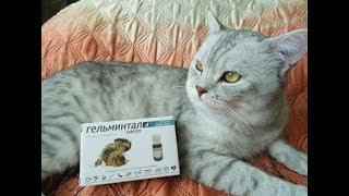 Профилактика паразитов  у кошек!
