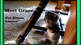meet gracie our brand new kitten this is especially for animal and gadget lovers