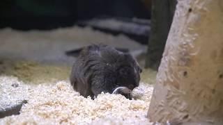 【千葉市動物公園】 何かを探していた。
