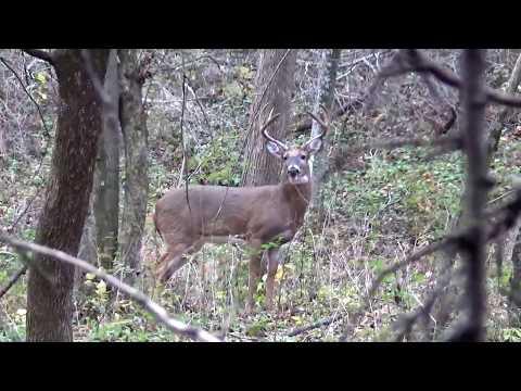 wisconsin-buck-2016-rut