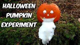 Halloween Pumpkin Experiment
