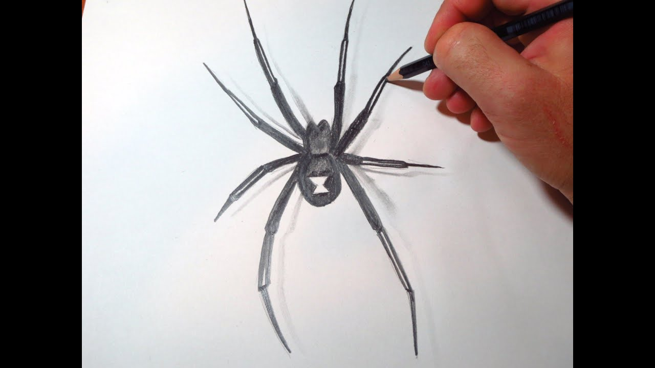 Uncategorized Easy To Draw Spider how to draw black widow spider youtube