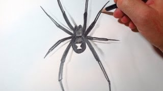 How To Draw Black Widow Spider