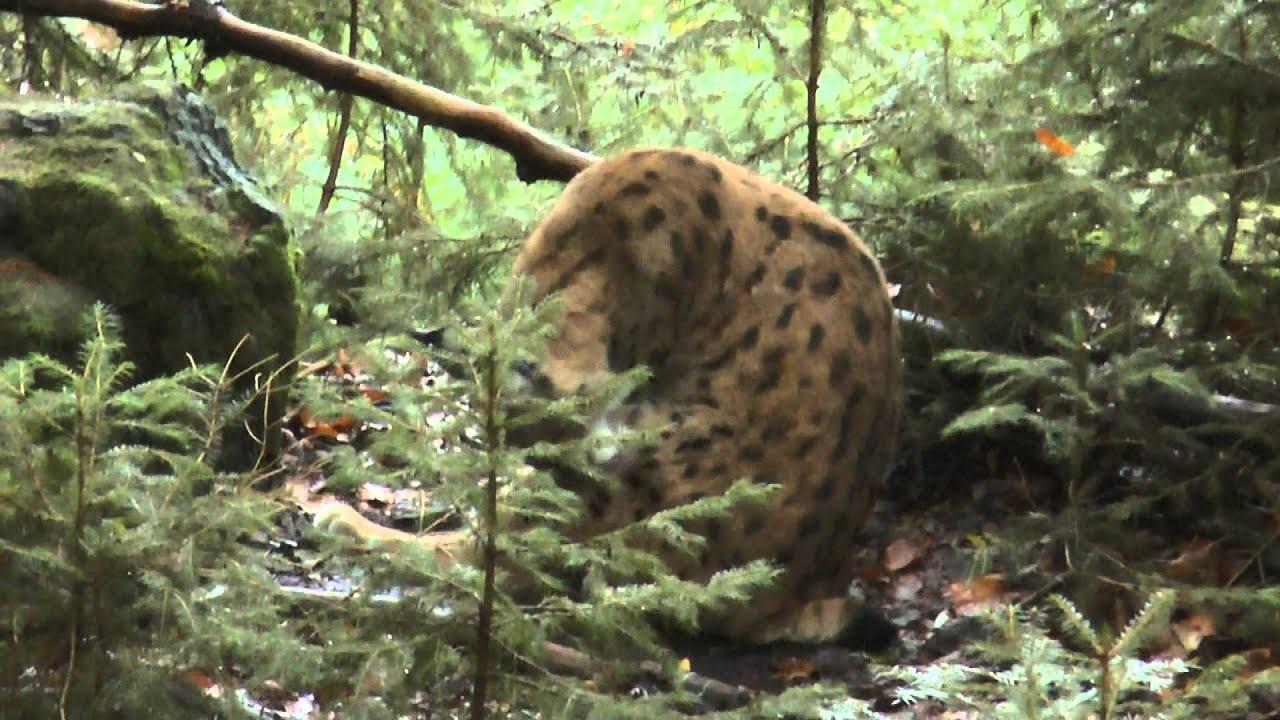 Bigfoot Bayerischer Wald