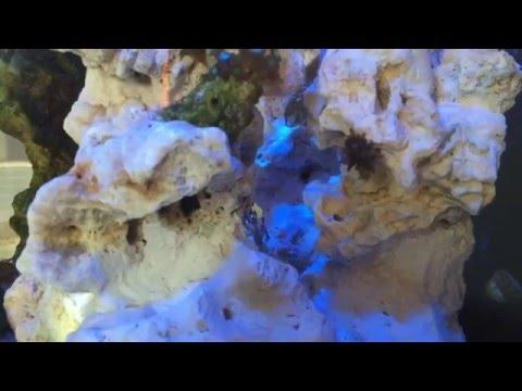É possível manter o aquário marinho sem testes?!