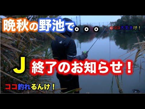 【大阪野池巡り】晩秋&雨の日のバス釣り!チャマオとJのぶらり旅 1話 さくらさん御免なさい