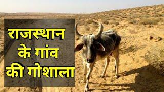 vlog- राजस्थान के गांव की गोशाला। 👍