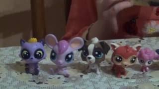 Littlest Pet Shop открываем новую зверушку Маленький зоомагазин(Привет ребята и девочки. На своем канале я собрала самые интересные мультики, игрушки, рассказы, находки..., 2016-05-18T17:42:41.000Z)