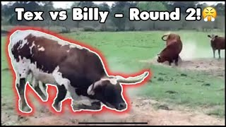 Tex VS Billy- Round 2