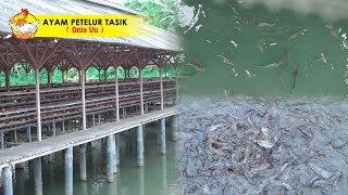 Bisnis Sampingan LONGYAM & Pembesaran Ikan Lele 2-3 Bulan Panen Rp.5jt